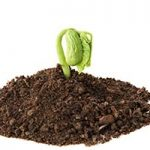 new-sprout-in-dirt